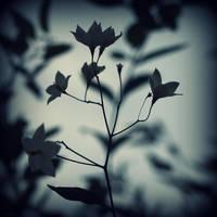 Cold bloom by lostknightkg