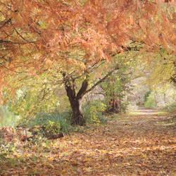 Autumn 18-9 by lostknightkg