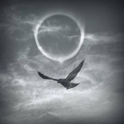 Winter Raven by lostknightkg