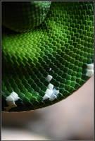 Snake Skin by Alphamind