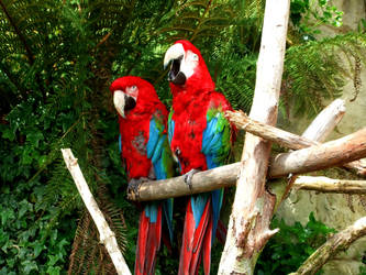 Macaws by 3starlight98