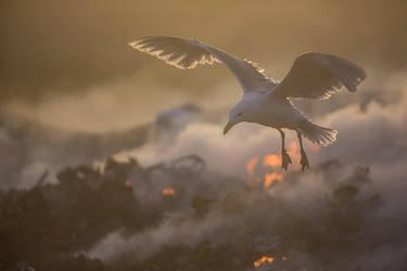 Michael Bay nature photography by phalalcrocorax