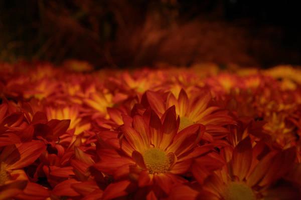 Flower Bedding by ElysiumFields