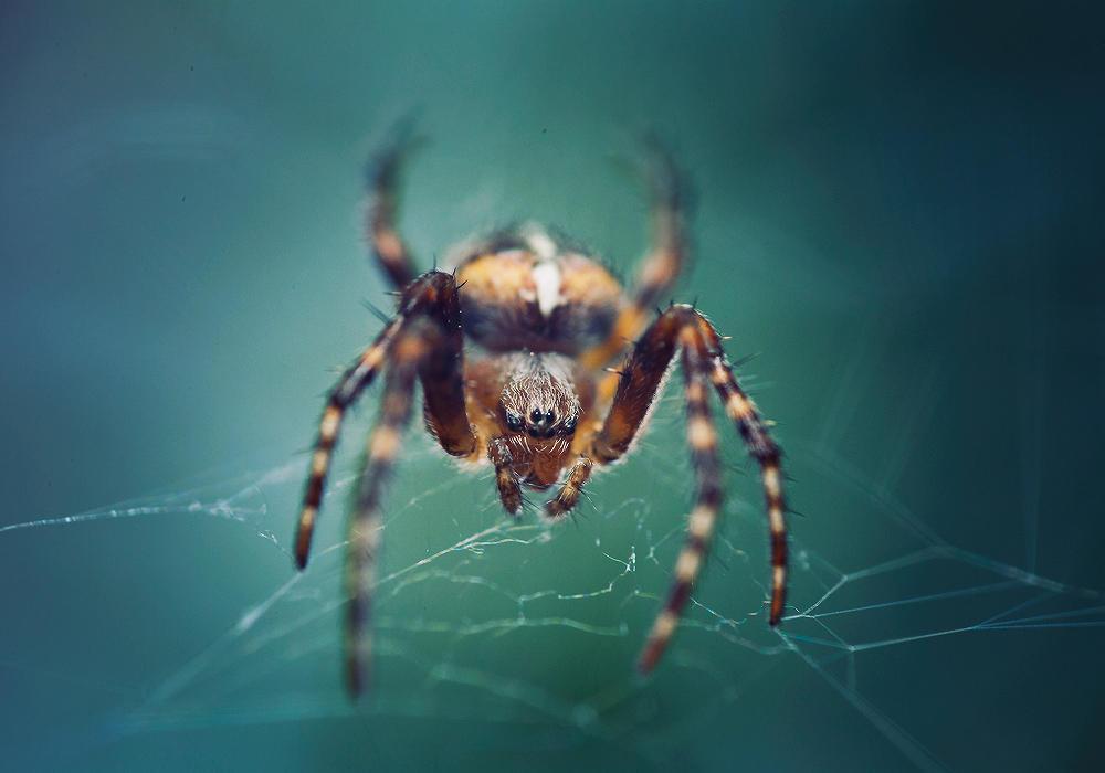 spider 2 by SquadGazZz