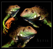 Netis 3 by dinyctis