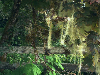 Moss Streamers - Forks, WA by RC-ForksWA