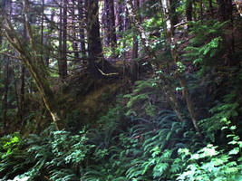 Rain Forest Hillside, Forks WA by RC-ForksWA