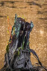 A Splash of Life by ryangallagherart