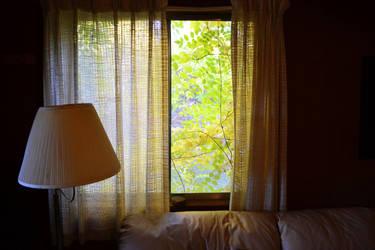 outside the window by alekswasheree