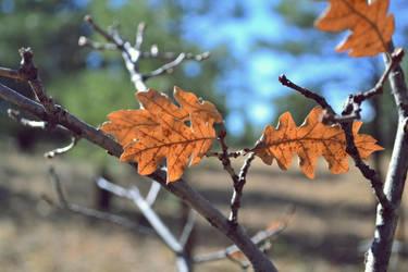 leaf by alekswasheree