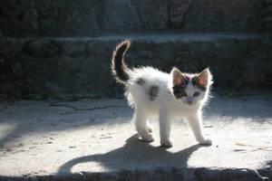 Kitty by MoxMonica