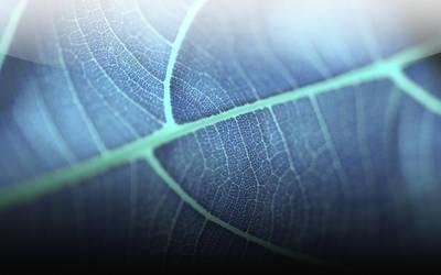 Leaf Skin by Epheus