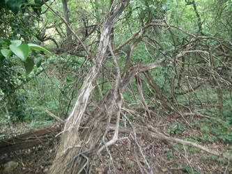 Fallen Tree by jay042