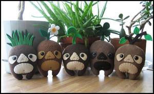 Sprout Tops by melkatsa