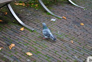 Amsterdam 10 by AlexDeeJay