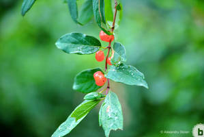 Wild Berries by AlexDeeJay