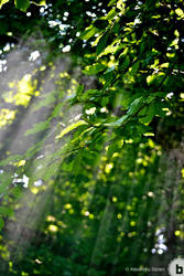 light rays by AlexDeeJay