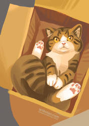 Cat in box by Shmyrina