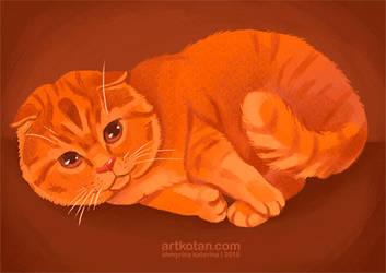 Red cat by Shmyrina