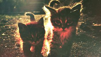Kittens by 1-DreaM