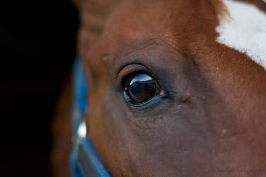 Horse's Eye by tlbauder1987