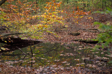 The Autumn Waters by tlbauder1987