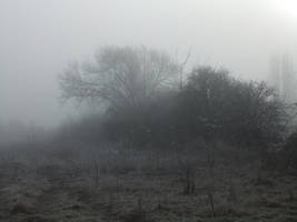 In the Mist 07: Hedgerow by fuguestock