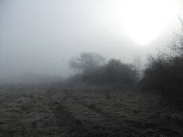 In the Mist 06: Track and Trees by fuguestock