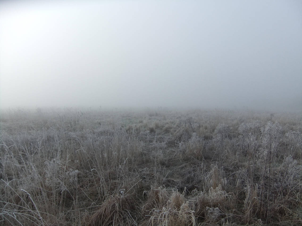 In the Mist 04: Field by fuguestock