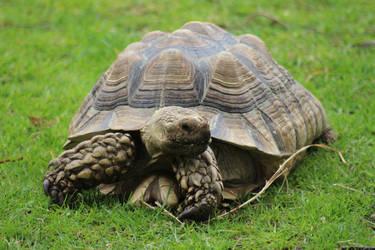 Tortoise 2 by fuguestock