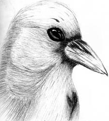 Raven by unihope