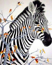 Zebra -colored pencil- by NoKnack