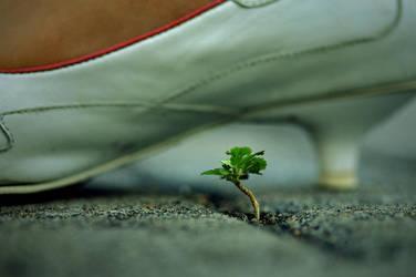 Life Under Our Feet by hamkahatta