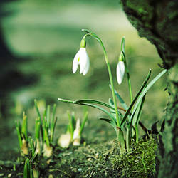 Springtimes by Elasias