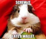 Wallet Eating Guinea Pig by SkipBack