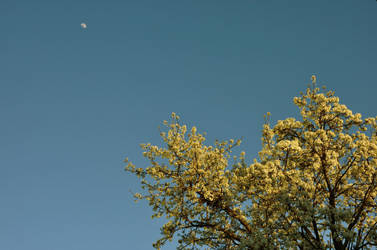 Spring under the moon by leonardousta
