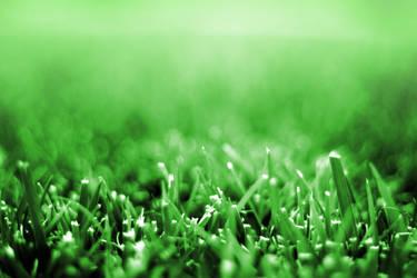 Grass Closeup by JaedenDak