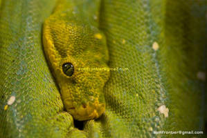 Tree python by Ashed-Dreams