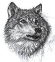Wolf by ChayaA