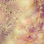 sweet sweet by Megson