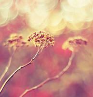 sweet by Megson
