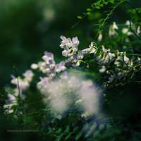 meadow of heaven by Megson