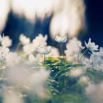 awakening by Megson