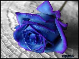 Blue 'n' Violet Rose by NightmareFourteen