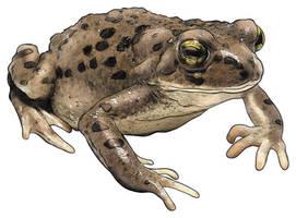 Toad by handtoeye