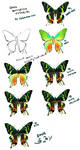 Butterfly Tutorial by chisacha