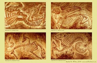 fossil prints poster by RachelHWhite