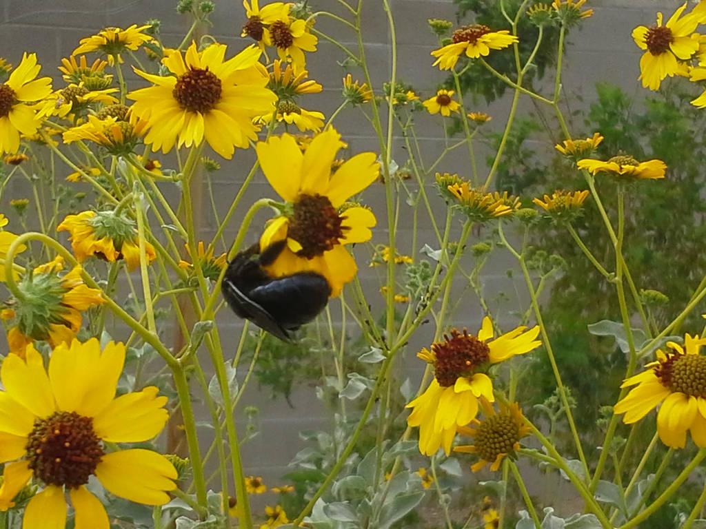 Carpenter Bee and Flowers by RachelHWhite