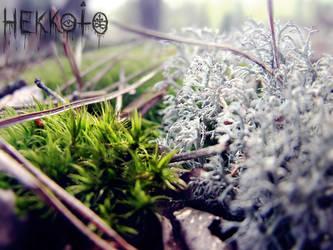 Moss by Hekkoto