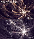 Neurogenesis (Before and After) by ThoughtWeaver